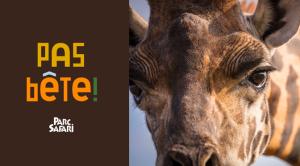Concours Parc Safari 2021