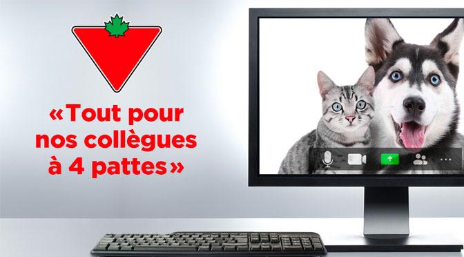 Concours Carte cadeau Canadian Tire Tout pour les collègue à 4 pattes SB Privilège
